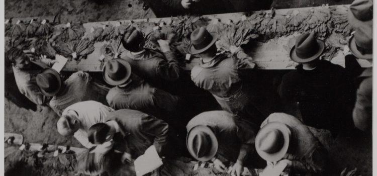 Willem La Grouw (1892); in dienst van de tabaksmakelaar